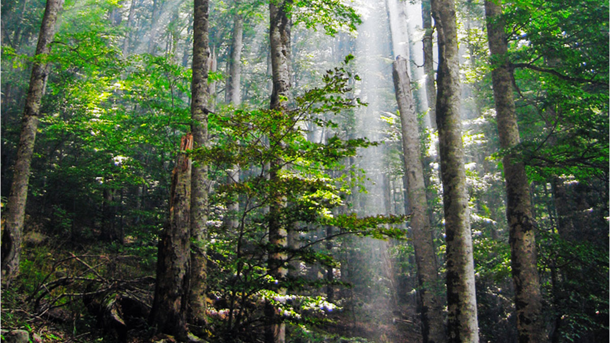 Four forestry initiatives Pakistan is taking to build the green economy of Pakistan - LEAP  Pakistan